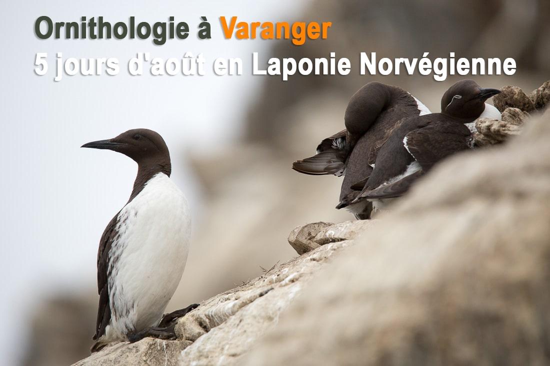 Ornithologie-Varanger-GregoryROHART-13