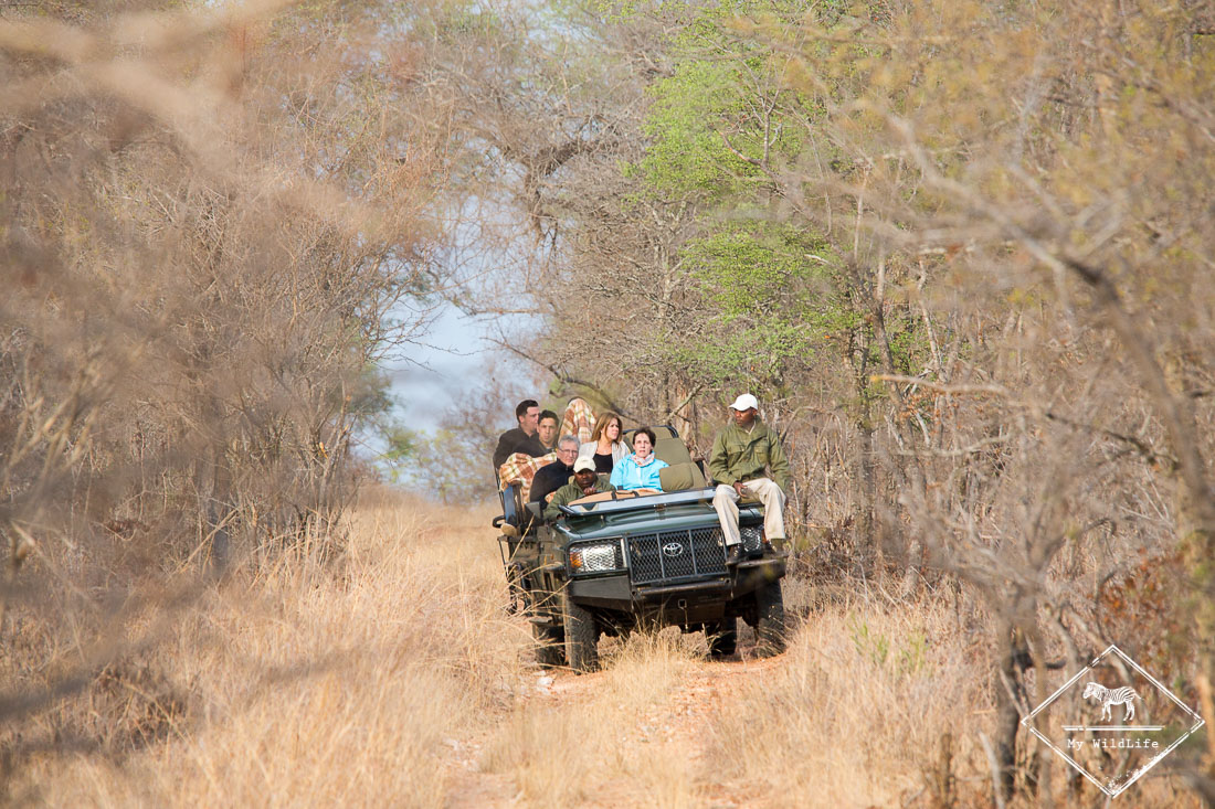 10-erreurs-eviter-pour-reussir-son-safari-GregoryROHART-2