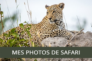 Photos de safari - My Wildlife