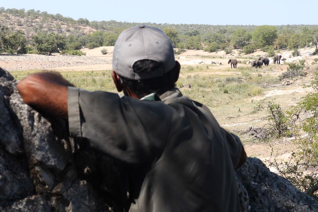 Kruger : Olifants River Backpacking Trail