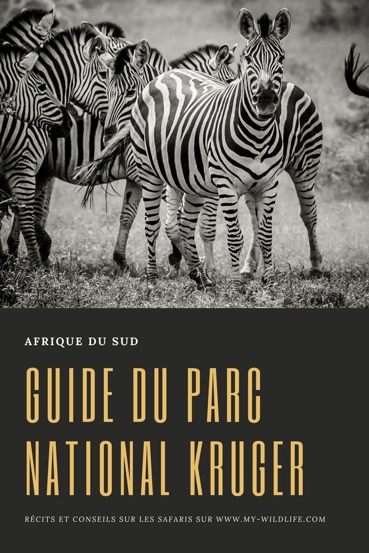 Carte Malaria Afrique Du Sud.Parc National Kruger Le Guide Pratique