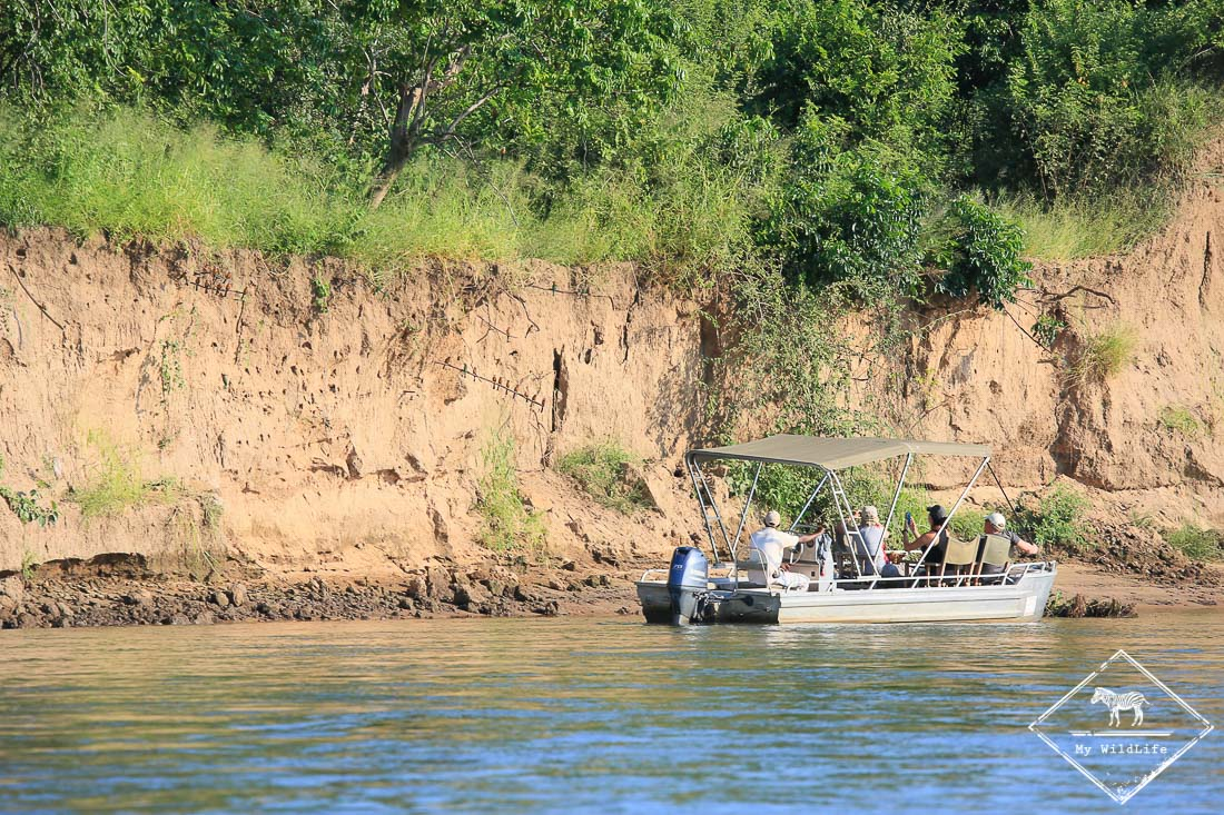 Safari ornithologique au Lower Zambezi
