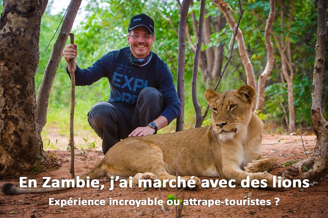 En Zambie, j'ai marché avec des lions