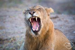 10 erreurs à éviter pour réussir son safari