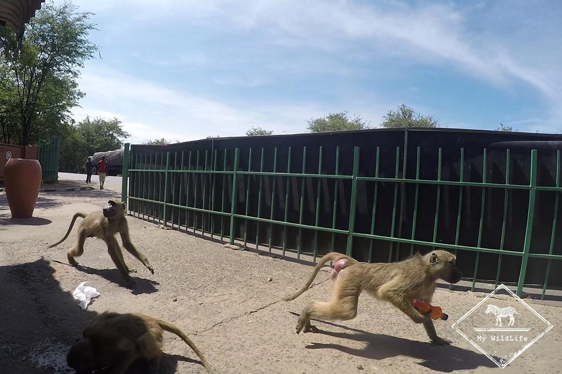 10 faàons de ne pas être un con en safari