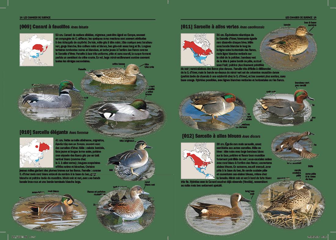 tous-les-oiseaux-rares-europe-8