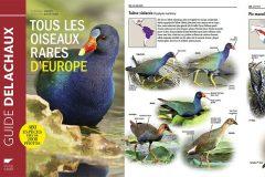 [Livre] Tous les oiseaux rares d'Europe