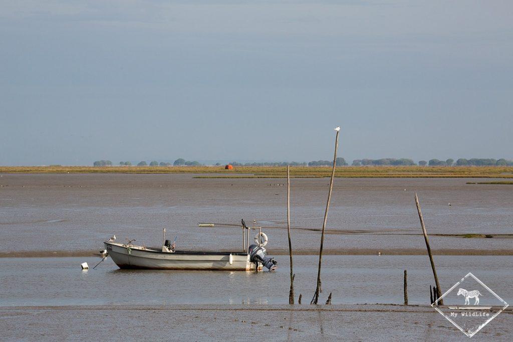 Ornithologie dans l'estuaire du Tage