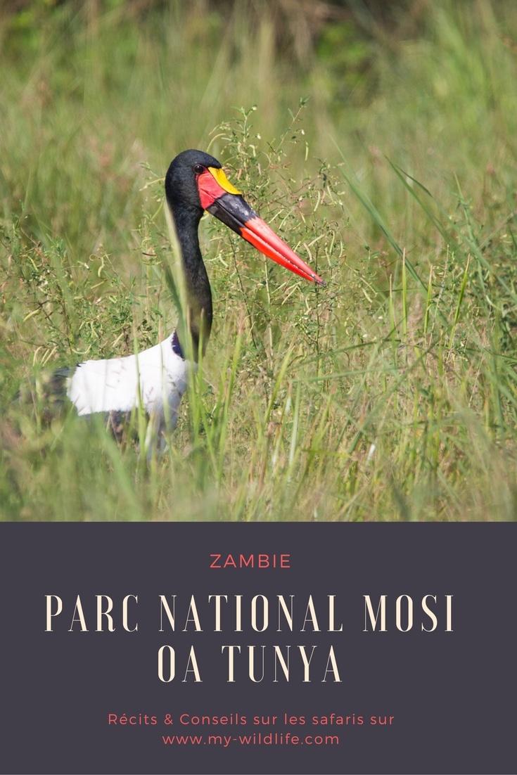 Zambie-Mosi-GregoryROHART