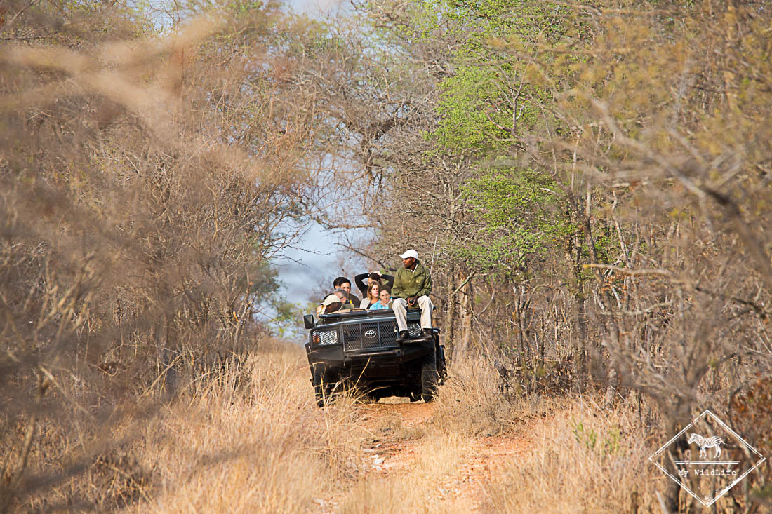 Safari Makalali Private Game Lodge
