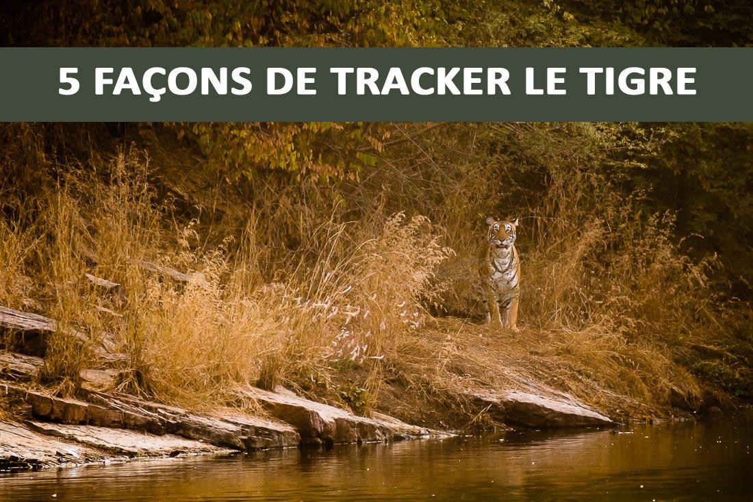 5 façons de bien tracker le tigre
