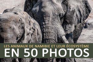Les animaux de Namibie en 50 photos
