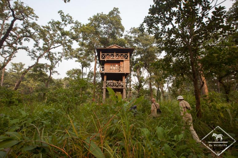 Tour d'observation, Chitwan