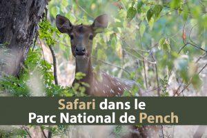 Safari dans le parc national de Pench