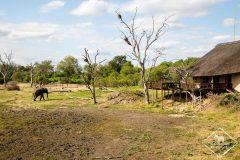 J'ai testé l'Arathusa Safari Lodge à la Sabi Sands Game Reserve