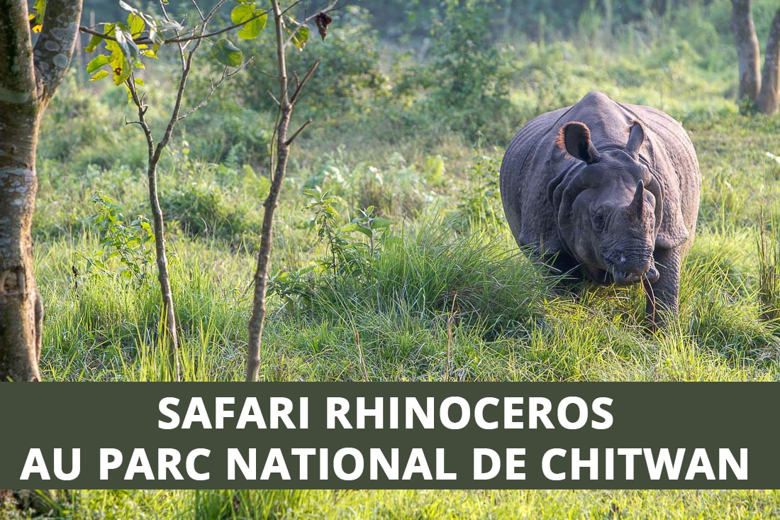 Safari rhinocéros au parc national de Chitwan