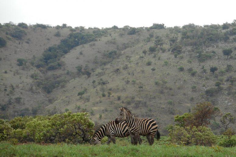 L'Akagera au Rwanda