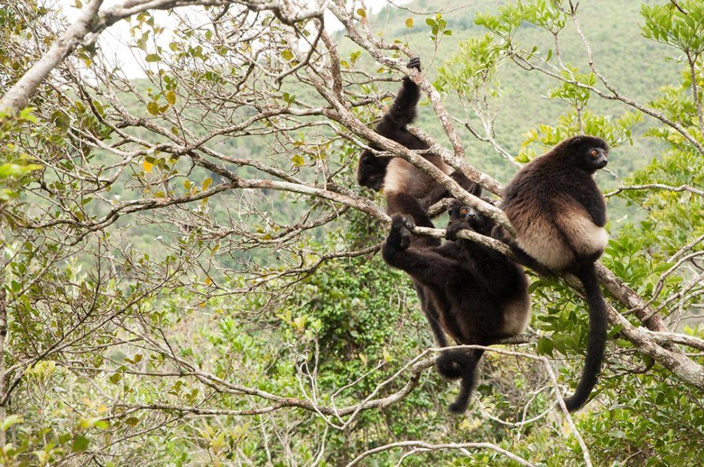 Le parc naturel de Ranomafana à Madagascar