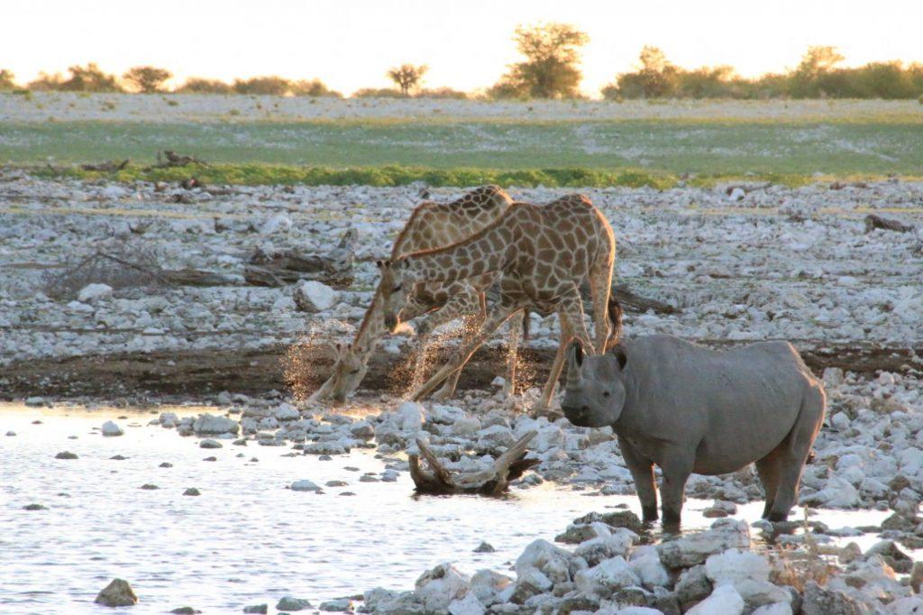 Le parc national d'Etosha en Namibie