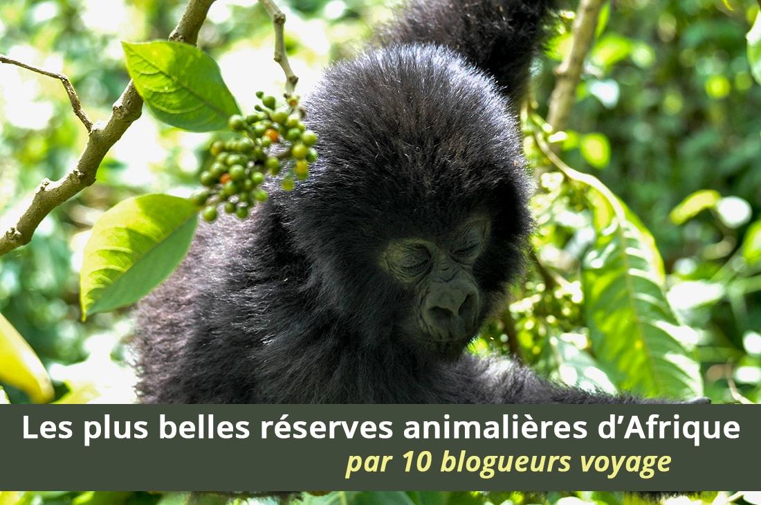 Les plus belles réserves animalières d'Afrique