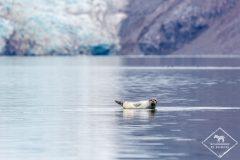 Croisière arctique aux confins du Spitzberg
