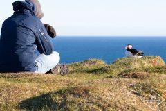 10 oiseaux faciles à observer en Islande