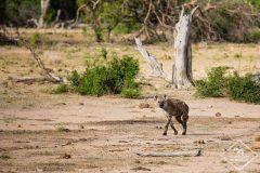Safari dans le Kruger : Vlog 2 de Bateleur à Orpen