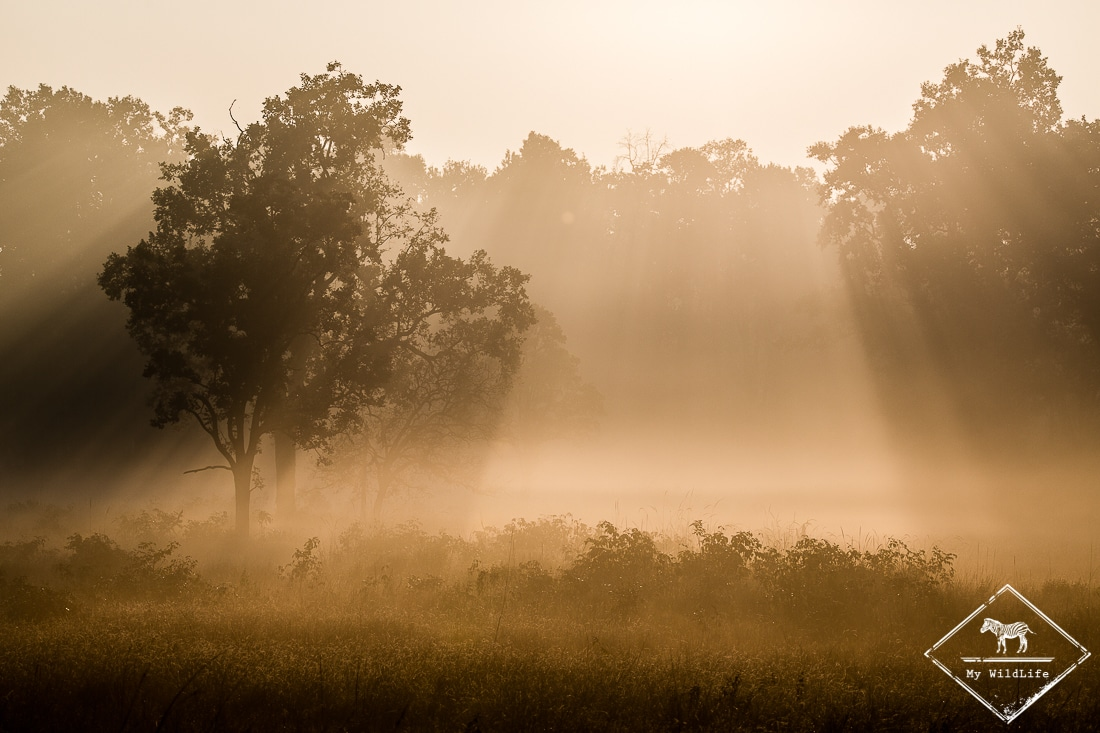 Lumière matinale à Kanha