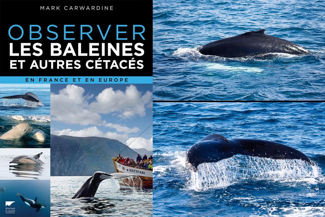 Observer les baleines et autres cétacés, en France et en Europe