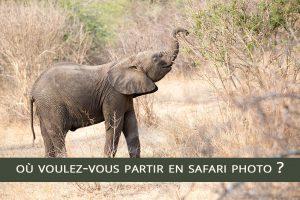 Où voulez-vous partir en safari photo ?