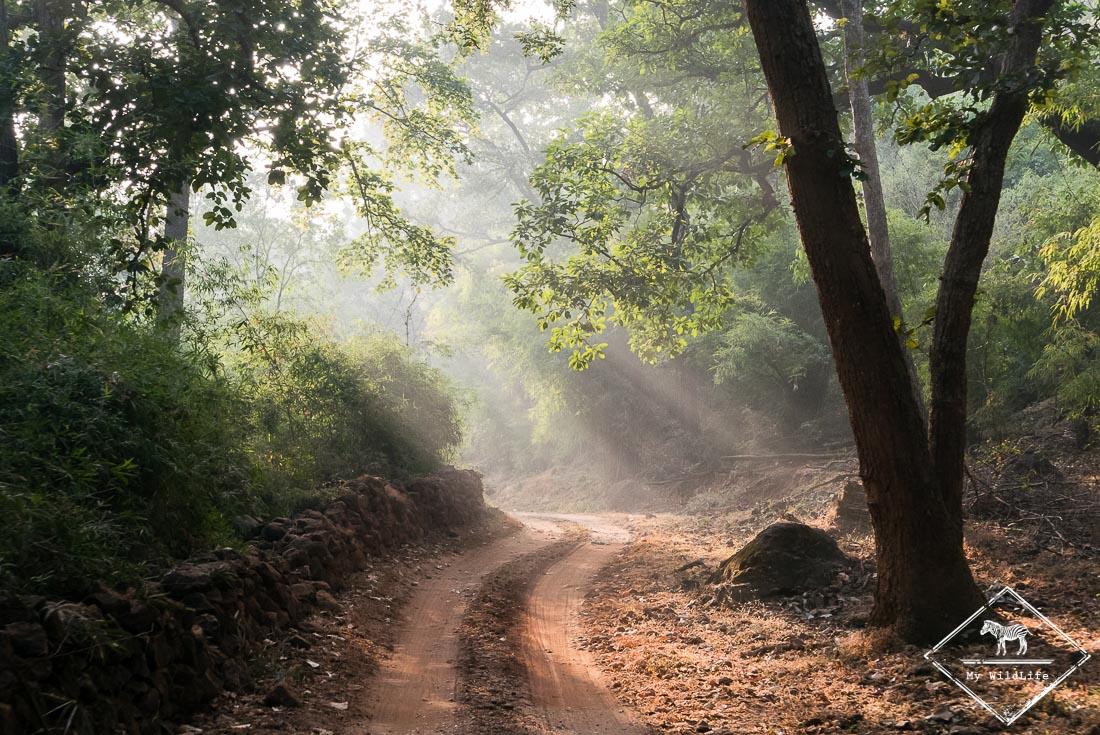 Parc national de Bandhavgarh