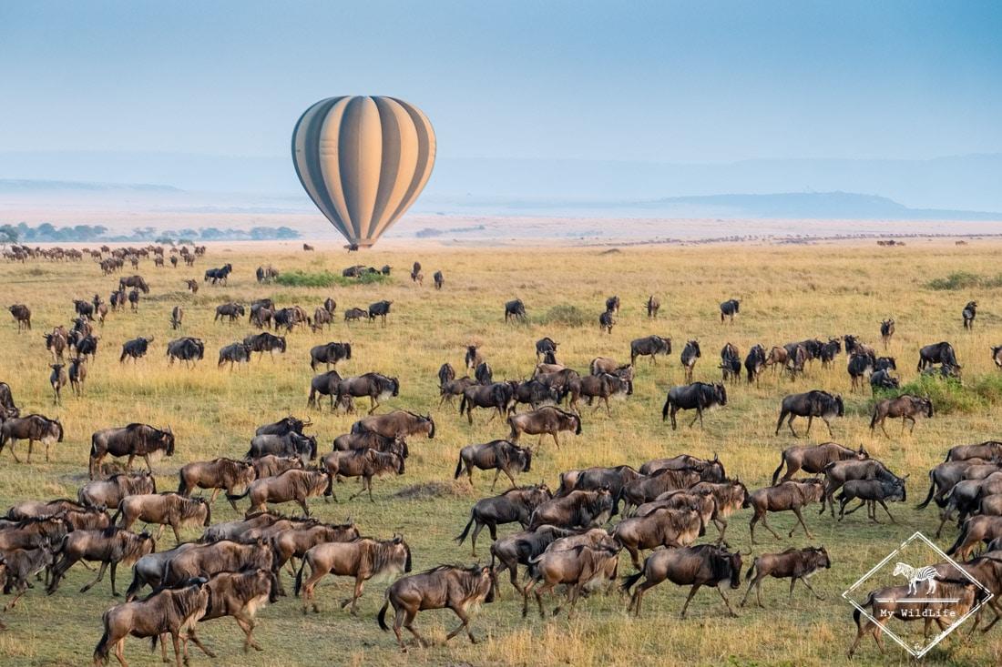 Safari en montgolfière à Masaï Mara