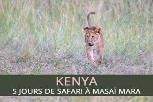 Safari à Masaï Mara