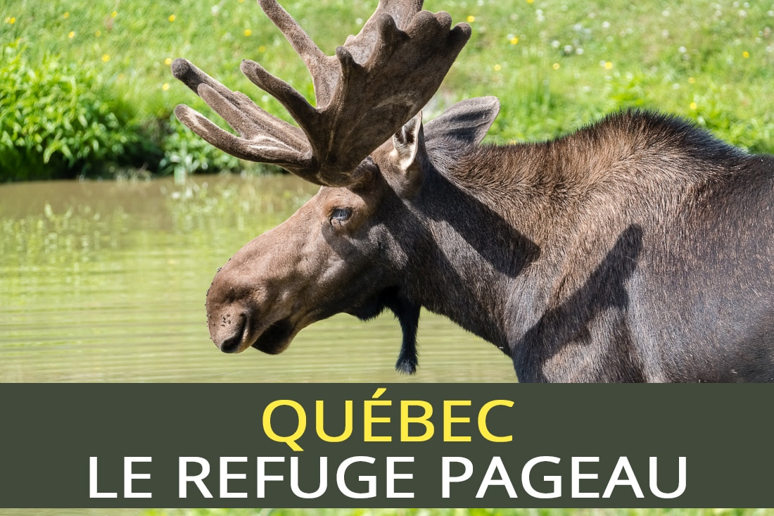 Refuge Pageau