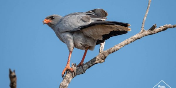 madikwe-gregoryrohart-1054-2
