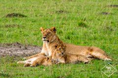5 jours de safari à Masaï Mara