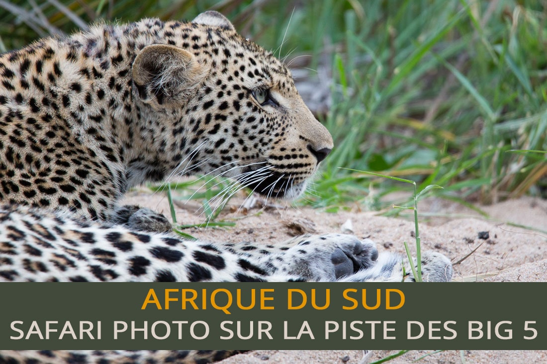 Safari photo sur la piste des Big 5