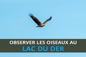 Observer les oiseaux au lac du Der