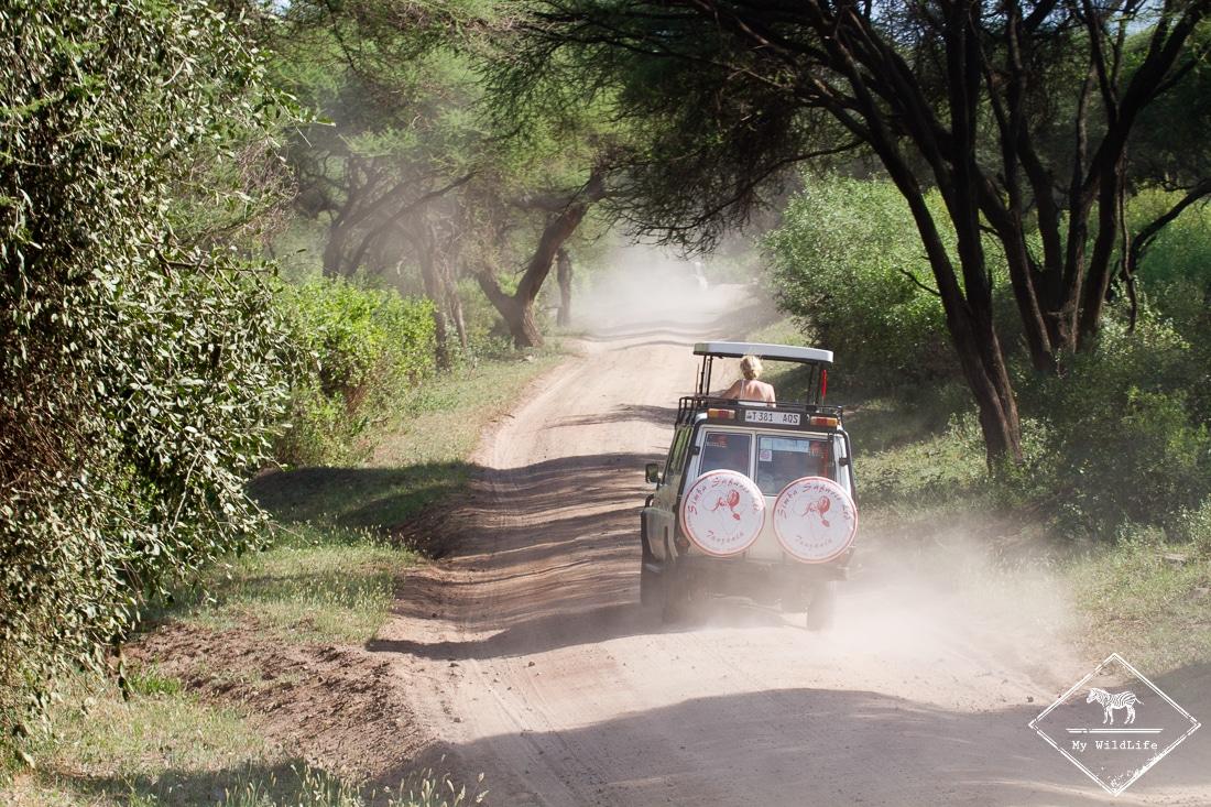 Safari Parc national du lac Manyara