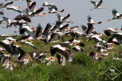 Guide pratique du parc national du lac Manyara