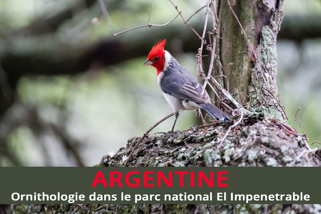 Ornithologie dans le parc national El Impenetrable