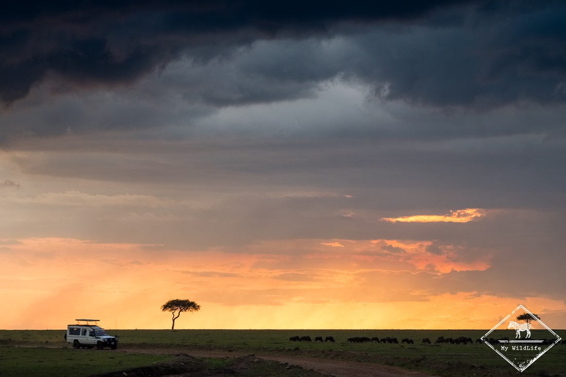 7 raisons de partir en safari au Masaï Mara