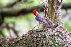 Ornithologie dans le parc national El Impenetrable