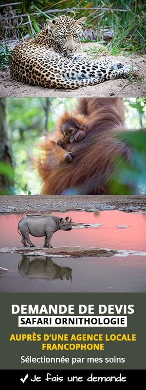 Demande de devis safari