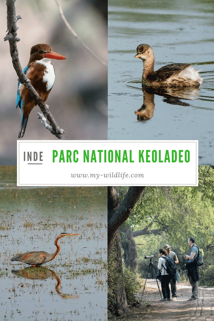 Ornithologie au parc national Keoladeo