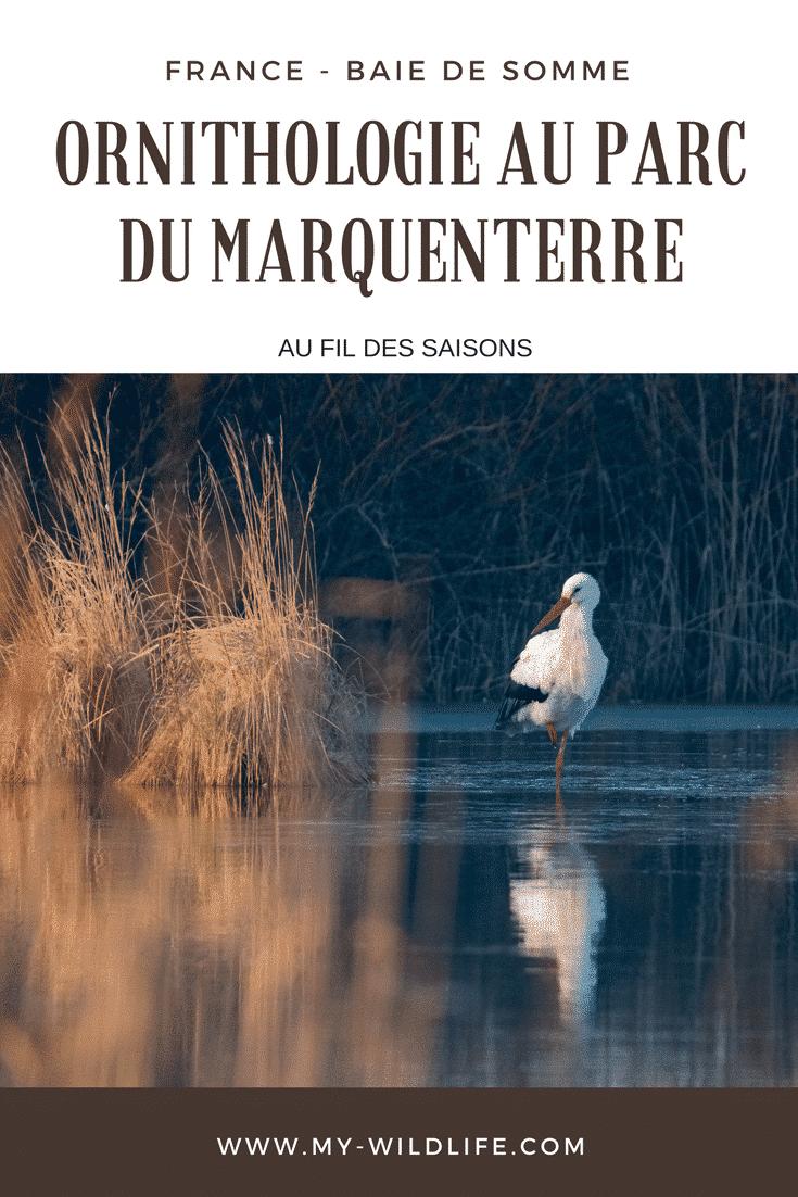 Marquenterre-01