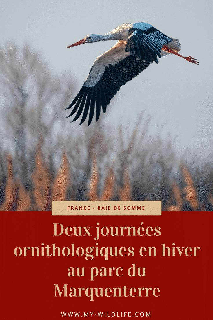Deux journées ornithologiques en hiver au parc du Marquenterre