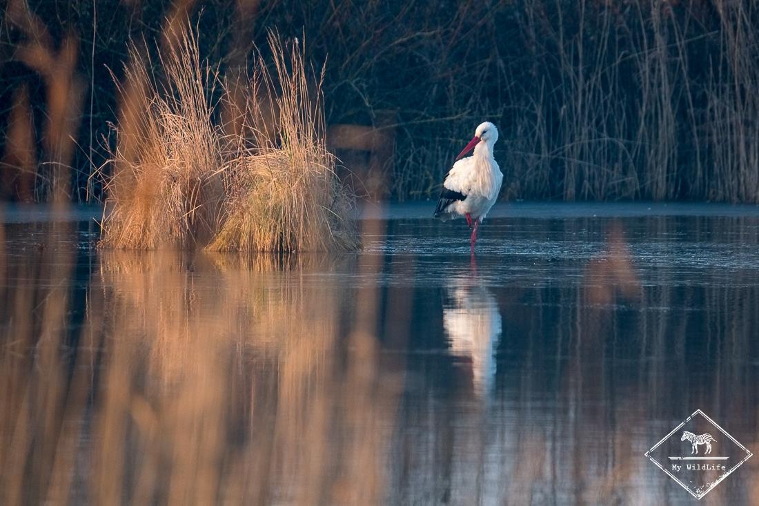 Observer les oiseaux au fil des saisons au parc du Marquenterre
