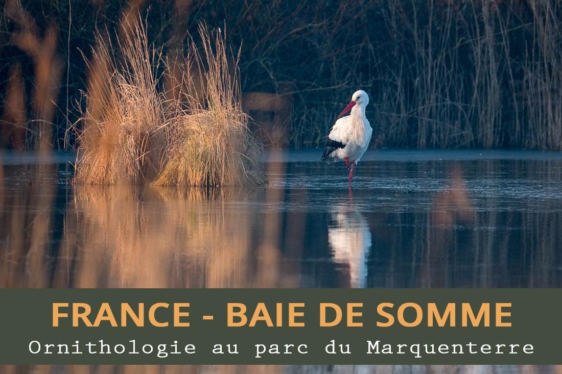 Ornithologie au Parc du Marquenterre