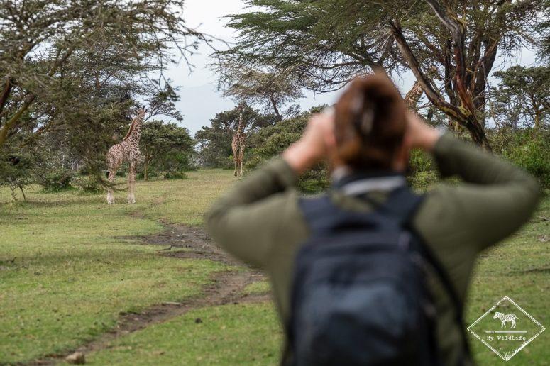 Girafes, Crescent Island
